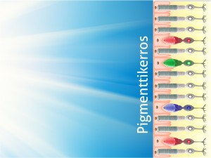 makulan pigmenttikerros